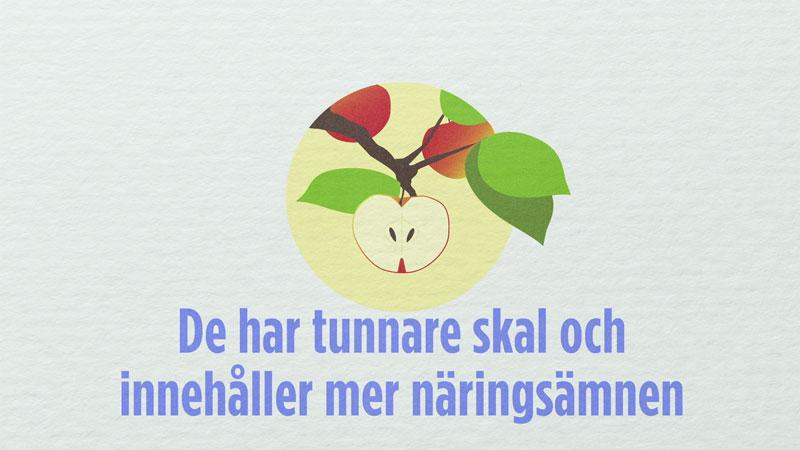 LRF Apples Animation Informationsgrafik Produktionsbolag Stockholm